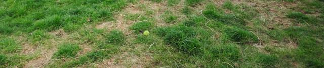 Rachel-grass-cutting